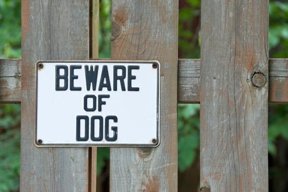 dog-bites-injury-south-carolina